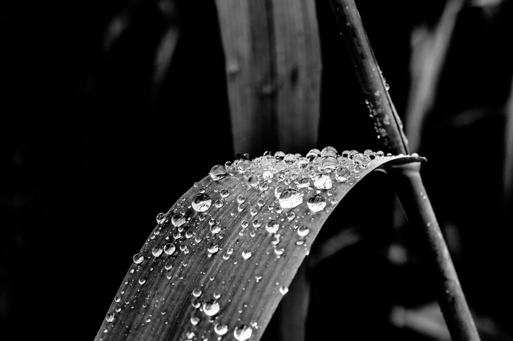 after-the-rain-art-black-and-white-close-up-235809-1024x681 How to regain your creative flow! PERSONAL GROWTH